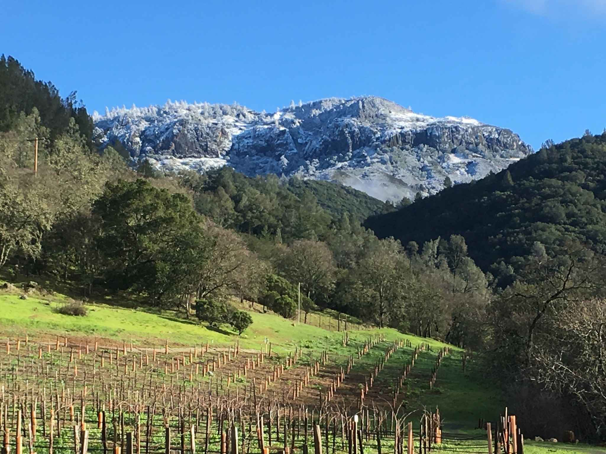Vineyard with Snow-Covered Palisades